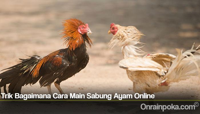 Trik Bagaimana Cara Main Sabung Ayam Online